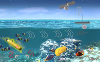 DARPA program to leverage marine organisms for DoD maritime hardware